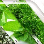 Organic and organic herbs